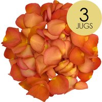 3 Jugs of Peach Rose Petals