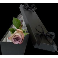 Luxury Lilac Rose