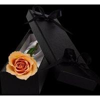 Luxury Peach Rose