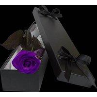 Luxury Purple Rose
