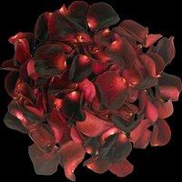 1 Jug of Black Baccara Rose Petals
