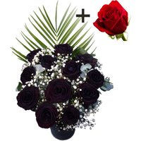 A single Bright Red Freedom Rose surrounded by 11 Black Roses