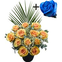 A single Blue Rose surrounded by 11 Peach Roses