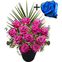 A single Blue Rose surrounded by 11 Pink Roses