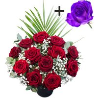 A single Purple Rose surrounded by 11 Deep Red Naomi Roses