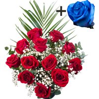 A single Blue Rose surrounded by 11 Bright Red Freedom Roses