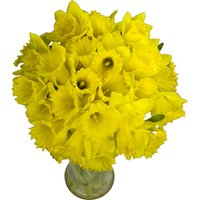 30 Long-Stemmed Dutch Greenhouse Grown Daffodils