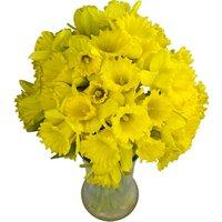 40 Long-Stemmed Dutch Greenhouse Grown Daffodils