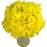 50 Long-Stemmed Dutch Greenhouse Grown Daffodils