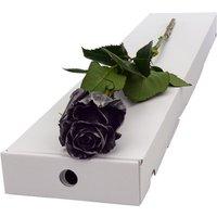 Letterbox Single Black Rose