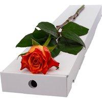 Letterbox Single Orange Rose