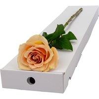 Letterbox Single Peach Rose
