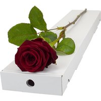 Letterbox Single Large Headed Red Naomi Rose