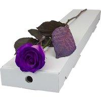 Letterbox Single Purple Rose