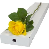 Letterbox Single Yellow Rose