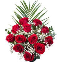 12 Bright Red Freedom Roses