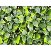 Product photograph showing Orange Leaf Trellis Wonderwal