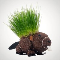 Grow Your Own Hairy Beaver - Grow Your Own Gifts
