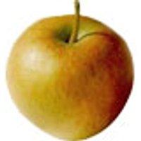 Äpfel Rubinette