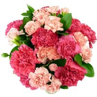 Pink Carnations - 12 stems
