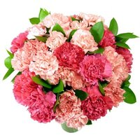 Pink Carnations - 24 stems