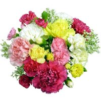 Classic Carnations - 12 stems