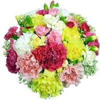 Classic Carnations - 18 stems