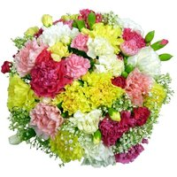 Classic Carnations - 24 stems