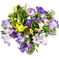 25 Assorted Freesia