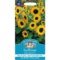 Robert Dyas Mr Fothergills Sunflower Little Dorrit Seeds