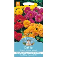 Robert Dyas Mr Fothergills Dahlia Dwarf Double Mixed Seeds