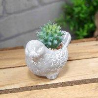 Decorative Bird Potted Succulent