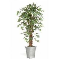 Ficus Lianna Tree Designer Lifelike Plant Display