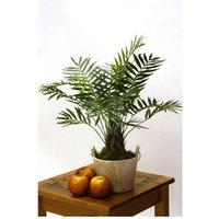 Mountain Palm Designer Lifelike Plant Display