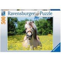 Ravensburger Pferd im Rapsfeld