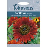 Pack of Red Sun Sunflower Seeds
