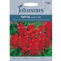 Pack of Blaze Of Fire Salvia Flower Seeds