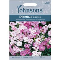 Dianthus Sweetness