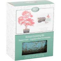 Sweetgum Bonsai Growing Kit