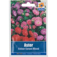 'Aster Colour Carpet Mixed Seed Packet