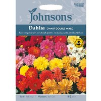 Pack of Dahlia Dwarf Double Mixed Seeds
