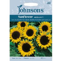 Pack of Mezzulah F1 Sunflower Seeds