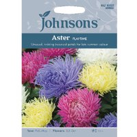 Pack of Aster Playtime Seeds
