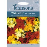 Pack of Tom Thumb Mixed Wallflower Seeds