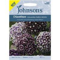 Dianthus Hollandia Purple Crown