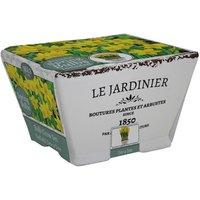 Bees Le Jardinier Daffodil Tete A Tete