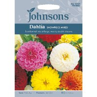 Pack of Dahlia Showpiece Mixed Seeds