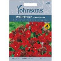 Pack of Scarlet Bedder Wallflower Seeds