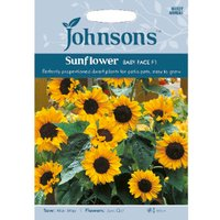 Pack of Baby Face F1 Sunflower Seeds