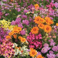Easy Annuals